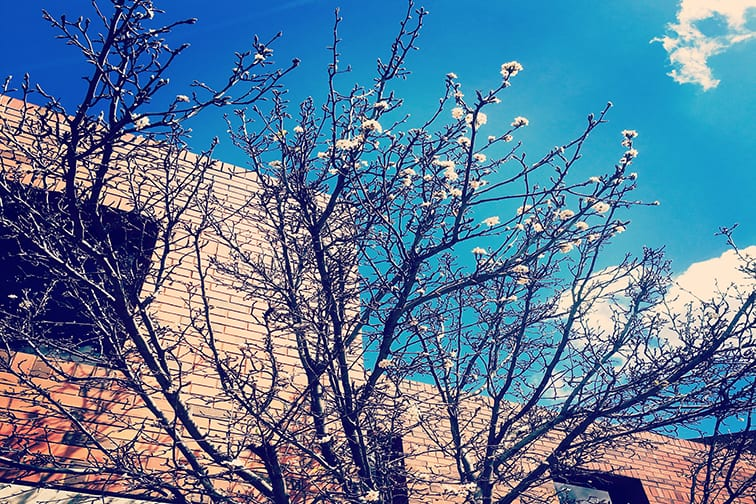 Shots of a tree on a spring day in front of a building on-campus