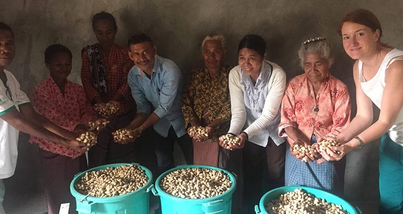 Timorese holding up harvested peanuts from bags filled with peanuts.