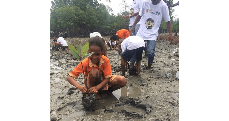 Timorese school kids planting mangroves to protect coastal livlihood from climate change
