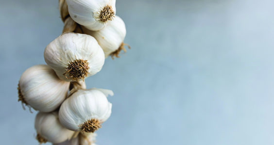 Could garlic hold the key to curing Alzheimer's disease?