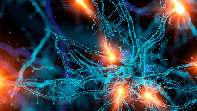 Curtin study a potential game-changer for treatment of traumatic brain injury